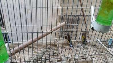 חוחיות כפי שנתפסו בבית החשודים. צילום: אליעזר גלבר, פקח מרחב ירושלים ברשות הטבע והגנים