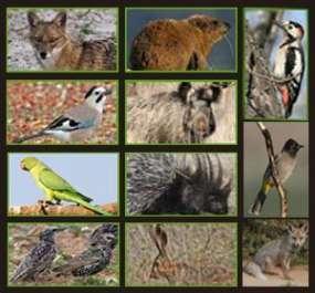 מניעת נזקים של יונקים ועופות לחקלאות