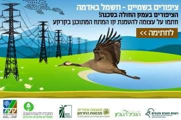 ציפורים בשמיים-חשמל באדמה הציפורים בעמק החולה בסכנה!