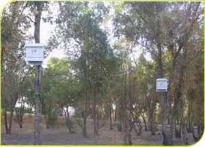 תיבות לינה לעטלפים בגן לאומי בית שאן