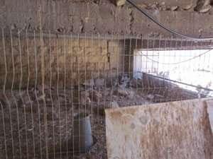 חוחיות בכלוב - צילם רועי ארד
