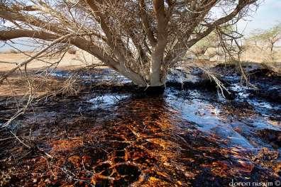זיהום נפט בשמורת טבע עברונה - צילם דורון ניסים