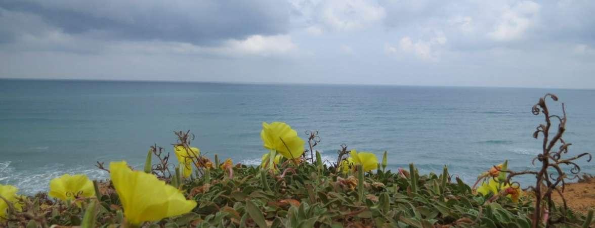 מגן לאומי חוף השרון ביום סגריר ובאהבה - נר הלילה, עננים, ים, ומצוקי כורכר - איל מיטרני