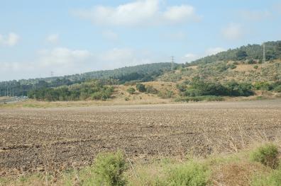 תל זריק - דר' דרור בן יוסף