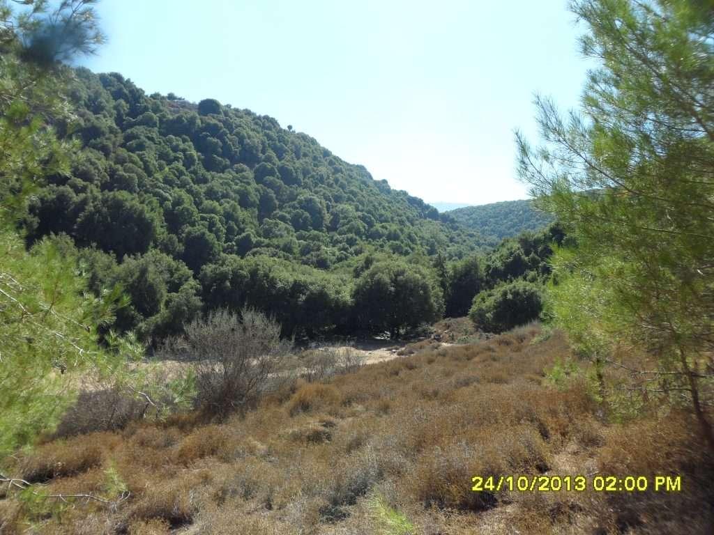שמורת טבע יער ברעם - יחיאל פרקש