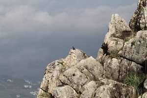 צוקית בודדת בגן לאומי ושמורת טבע ארבל - צילום דותן רותם