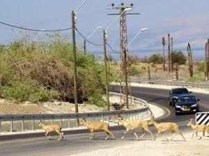 כביש עוקף הבולענים - צילם מיכאל בלכר
