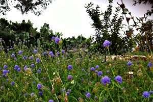 גן מקלט בגן לאומי ציפורי צילמה: תמי קרן-רותם