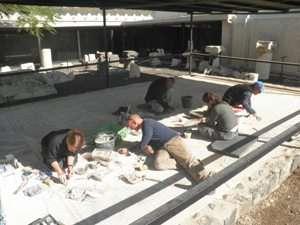 שימור ושחזור הפסיפס בחצר המוזיאון לארכיאולוגיה בגן השלושה