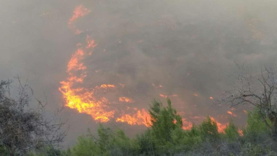 שריפה בשמורת הכפירה. צילום: אורי קייזר