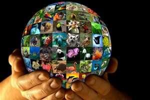 עתיד החי בבר בידינו - היום העולמי לשמירת החי בבר 3.3