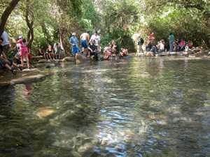 בריכת שכשוך בשמורת טבע תל דן - צילם יעקב שקולניק