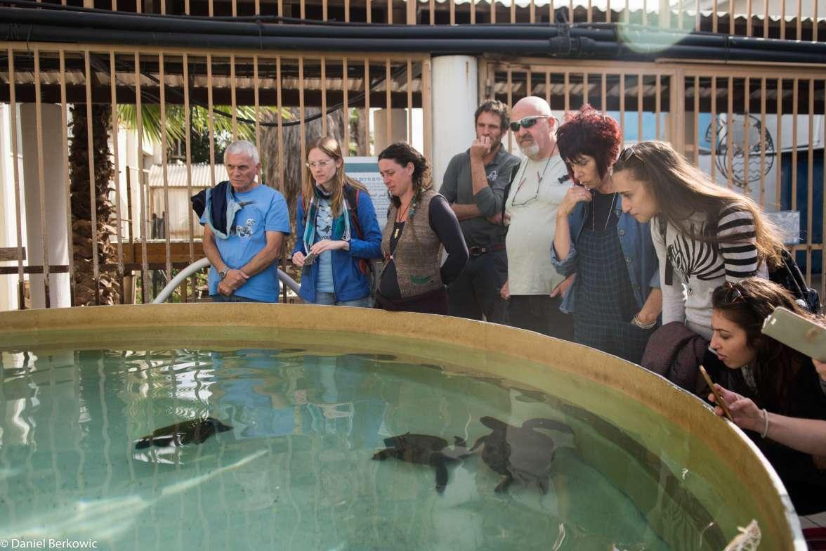 המרכז להצלת צבי ים- דניאל ברקוביץ