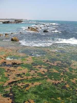 חוף ים סלעי ומפרץ באכזיב