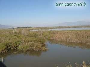 השמורה וברק רמת הגולן והגליל העליון