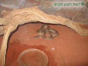 כלוב הנחשים בשמורת טבע חי בר יטבתה