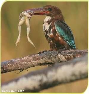 חורף של ציפורים בשמורת טבע עין אפק