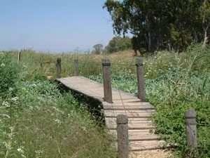 גשר השביל מעל פלגי המים בעין אפק