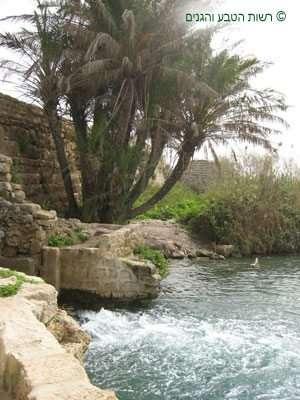 מים שוצפים במעבר נחל תנינים את הסכר העתיק
