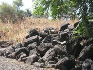 שפן סלע דרדרת סלעי בזלת