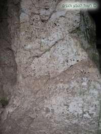 שונית מאובנת של רודיסטים - נחל מערות