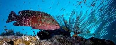 דקר, בין ערכי הטבע המוגנים בים האדום