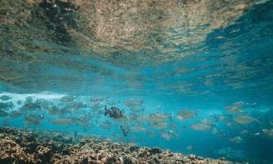 דגים בים התיכון