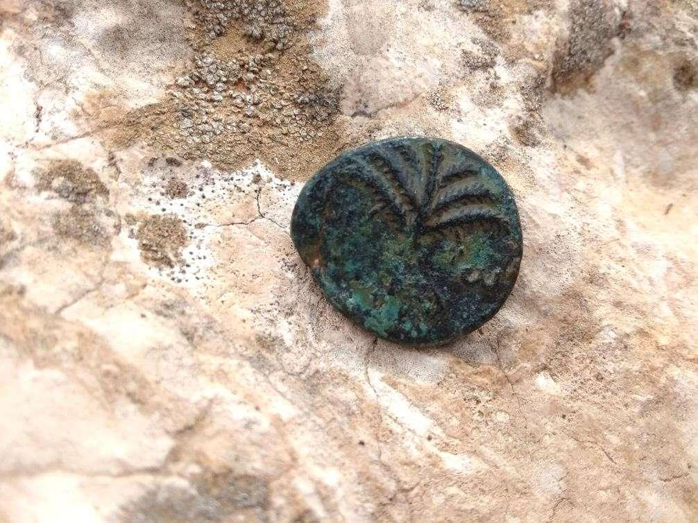 עץ התמר על המטבע מימי בר-כוכבא