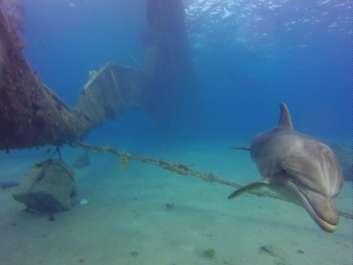 פגיעה בריף הדולפינים באילת