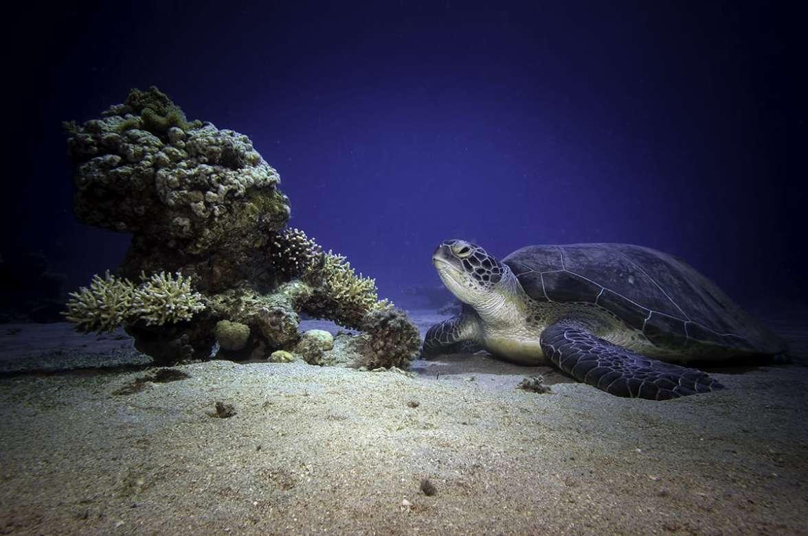 צבת ים ירוקה צילם עומרי עומסי