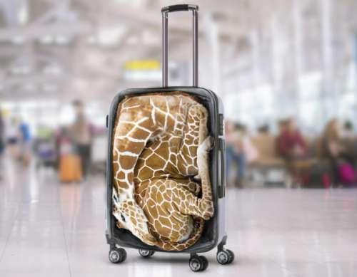 ג'ירפה במזוודה