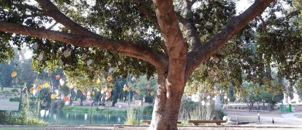 עץ המשאלות לראש השנה, צילום: שרית פלצ'י