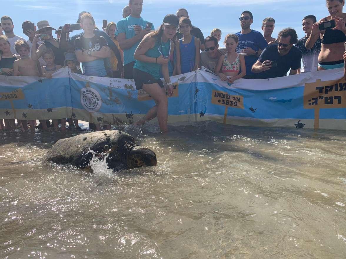השבת צבי ים לטבע