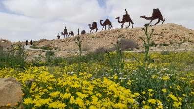 גן לאומי עבדת, צילום נדב טאובה
