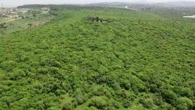 יער ריחן - צילום מתן מורד פקח מערב השומרון