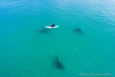 כרישים בחדרה