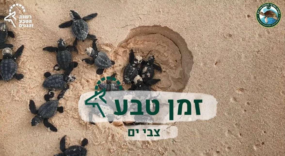 זמן טבע צבים