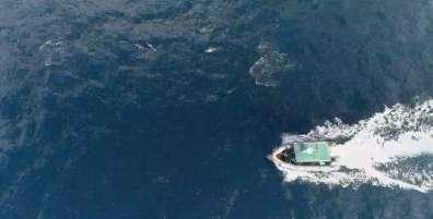 דולפינים וספינת פיקוח
