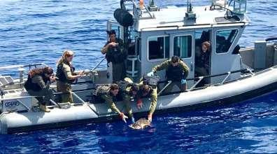 חיילים משחררים צב ים