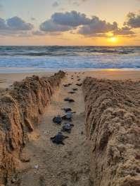 אבקועים בדרך לים בזריחה-עינב הדני רטג
