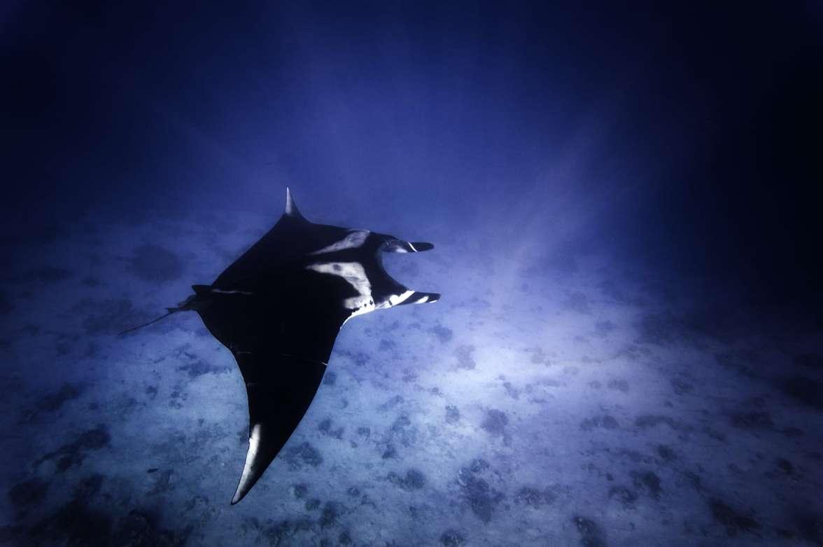 מנטה בשמורת האלמוגים - צילם עמרי עומסי