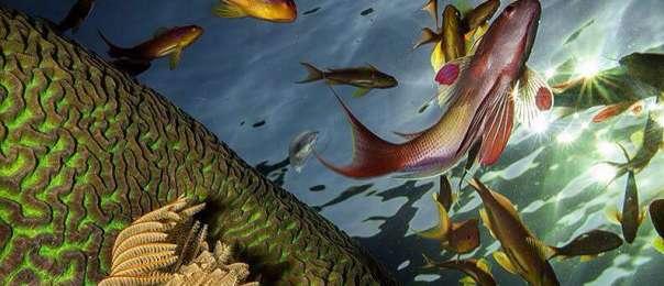 דגים בריף האלמוגים באילת - עומרי יוסף עומסי