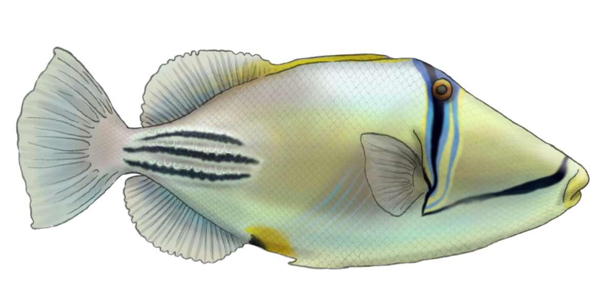 פיקסון ים סופי