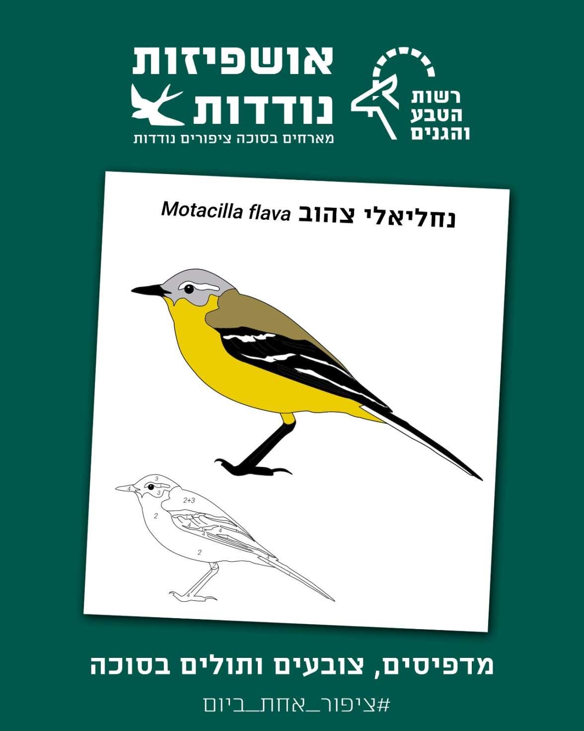 דף מידע וצביעה - נחליאלי צהוב