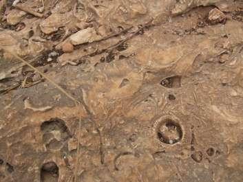 מאובנים בנחל מערות - אייל שפירא