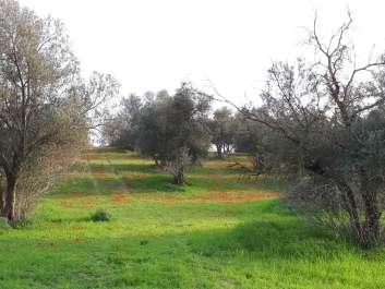 בתרונות רוחמה צילום רחל עברון (2)