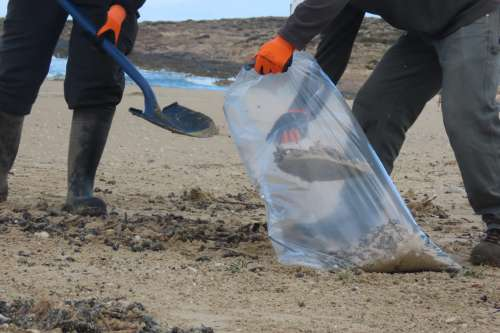 נקיון חופים - החותרים