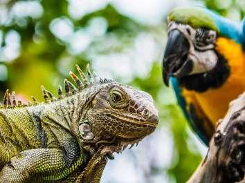 חיות אקזוטיות המגודלות כחיות מחמד צילום: Depositphotos