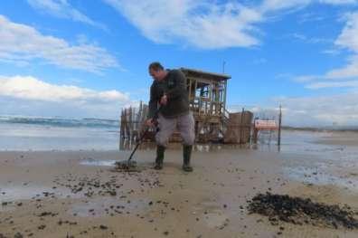 מנקים את הזפת מחופי הים - צילמה שרית פלצ'י מיארה