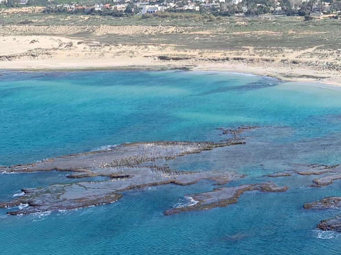 נזקי הנפט בחופים סלעיים